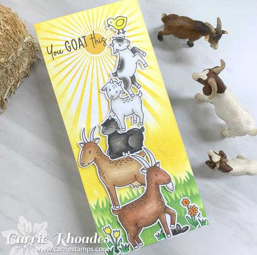 Slimline goats 1